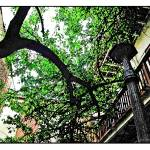 """New Orleans Warped tree"" by jbjoani2"