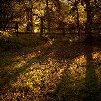 Sunset light and long shadows Art Prints & Posters by Andy Stafford