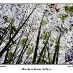 """""""Silver Bamboo"""" by randombeam"""