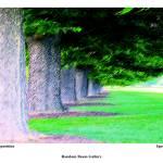 """Tree Composition"" by randombeam"