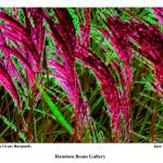 """Decorative Grass. Burgundy"" by randombeam"