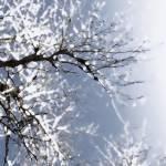 """""""Frosty Poplars"""" by BarbaraLin"""