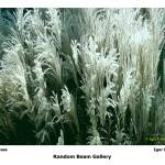 """Silver Grass"" by randombeam"