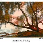 """""""Tree at Lake Geneva"""" by randombeam"""