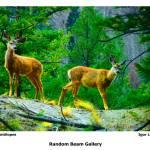 """Young Antelopes"" by randombeam"