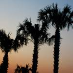 """Palm Trees at sunset DW"" by onsomeotherstuff"
