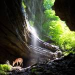 """Fawn at waterfall"" by schlemmer"