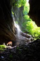Fawn at waterfall