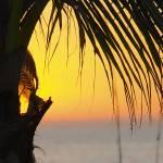 """Palm Sunset 1"" by auNaturale"