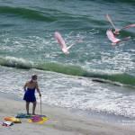 """""""Iconic Florida"""" by Jaimie"""