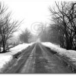 """""""FOGGY DIRT ROAD"""" by djphotos"""