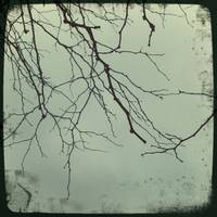 Twigs Against a Winter Sky