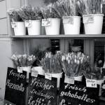 """tulip stand"" by photosbymj"