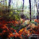 """Autumn Woodland Glade"" by Paul_Rumsey"