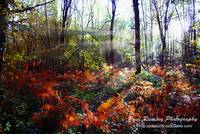 Autumn Woodland Glade