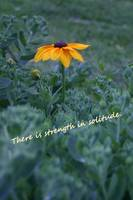 Strength solitude yellow flower quote
