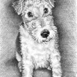 """Foxterrier"" by ArtsandDogs"