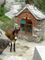 Mount Athos - Donkey and Chapelle