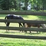 """Horse ranch Ringwood New Jersey"" by wlouis1265"