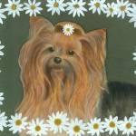 """""""Daisy Yorkie"""" by tinibaybeez"""
