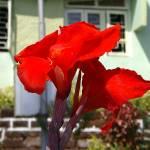 """""""Goan Iris"""" by ken_croslin"""