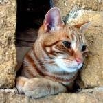 """""""Cat at Castle Window"""" by luv4pix"""