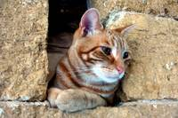 Cat at Castle Window