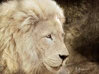Portrait Of A White Lion