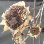 """autumn flowers"" by spiritsoflena"