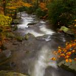 """Fall Colors at Old Jim Bale"" by vishalmodak"