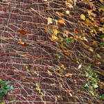 """Composition in Ivy Stems"" by LyndaLehmann"