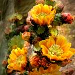 """Cactus Gold"" by Ciro"