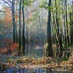 """Swamp"" by jones3006"