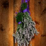 """Lavender on Cedar"" by vincent-field_photography"