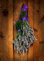 Lavender on Cedar