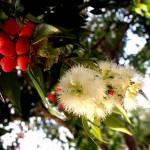 """""""Floral Fruit"""" by chrisbutler"""