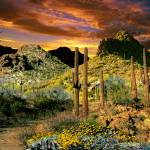 """Trails End Tucson Mountains"" by Ciro"