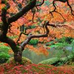 """Under That Maple Tree At Portland"