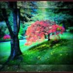 """""""Japanese Garden 10-3"""" by DBGilmore"""