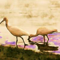 HERONS IN HEAVEN Art Prints & Posters by Donna Renzulli