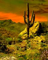 The Place of the Saguaro
