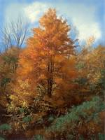 Autumn Leaves Art Print, Fall Trees, Fall Forest