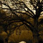 """Sheep under a tree"" by Myphotostore"