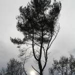 """Tree winter sun"" by Myphotostore"