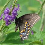 """""""Feeding Butterfly"""" by WendyRich"""