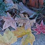 """""""Frosted Foliage"""" by Eileen"""
