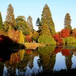 """Sheffield Park Garden"" by ClareForster"