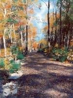 Fall Country Road, Autumn Road, Fall Path, Autumn