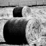 """Hale bales"" by adphotography"