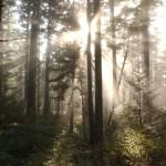 """""""sun rays"""" by KurtThorson"""